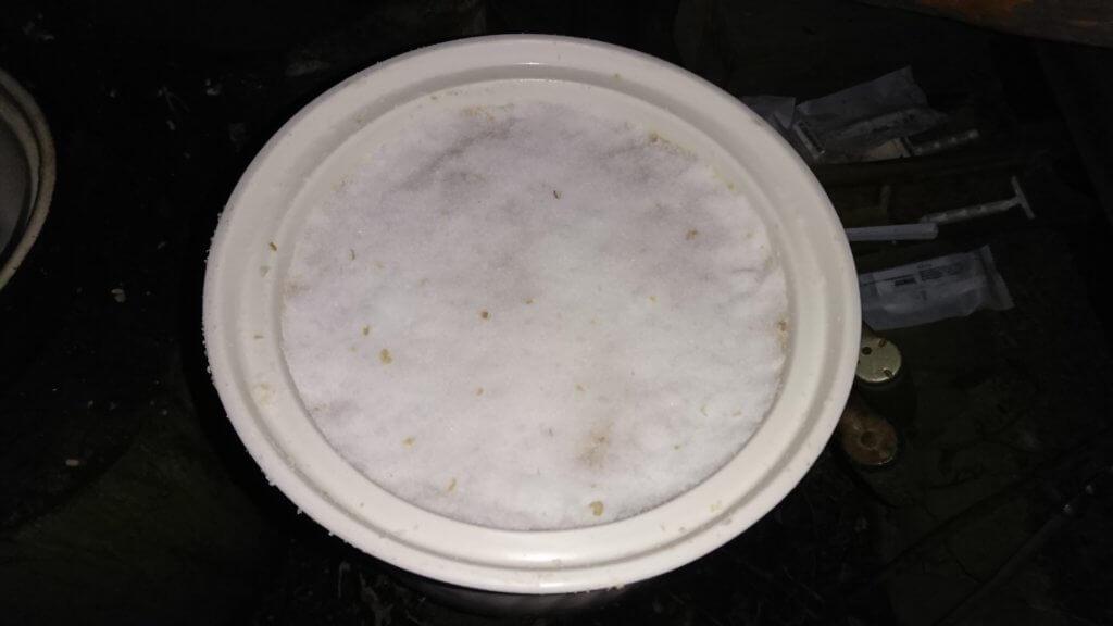 味噌仕込み(塩で蓋をする)