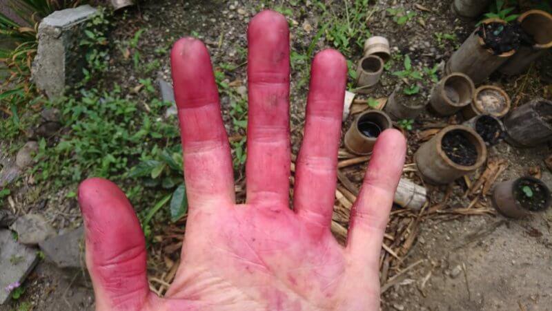 ベリーの色素付着で真っ赤な手