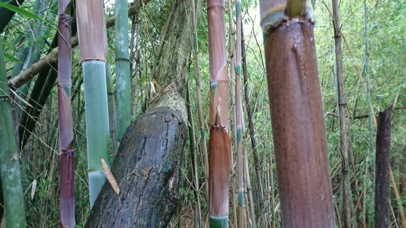 破竹の竹皮