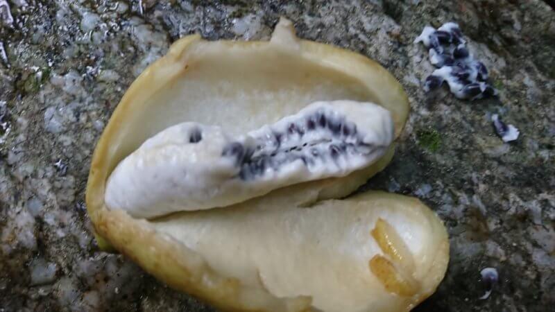 アケビの実と種